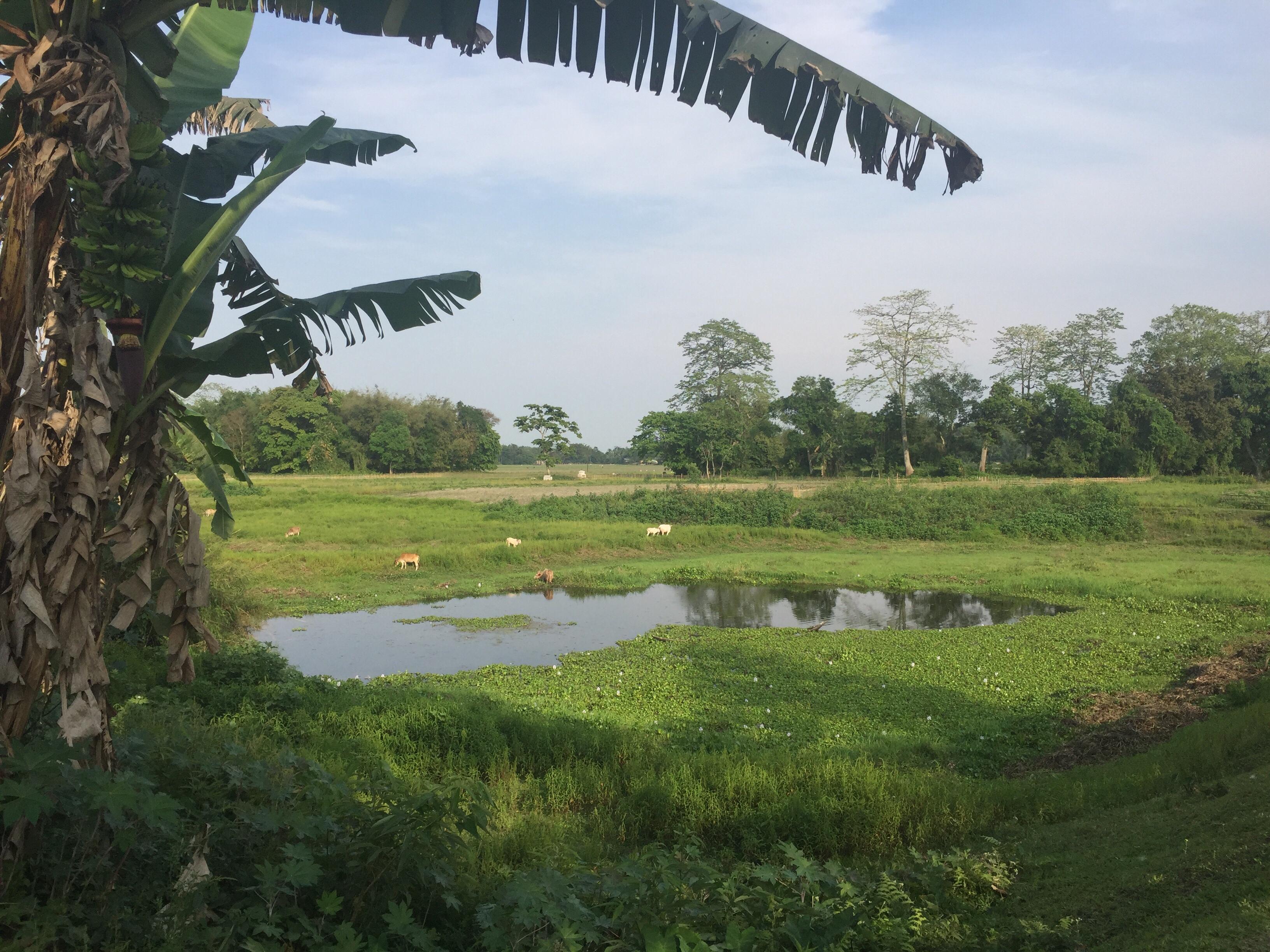 Réunion des habitants de l'île de Majuli. Ordre du jour: accueil des touristes. [fiction inspirée d'un petit délire suite à notre séjour sur l'île de Majuli, État de l'Assam en Inde]